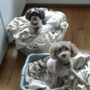 Andrea Henning's dogs sitting in dog beds